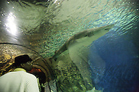 France. Alpes-Maritimes province.  Antibes. The shark tunnel in Marineland. A black man, wearing a white pullover and a black hat, watches a shark in the main 30 meter long tunnel. The aquarium contains two millions liters of salt water. Marineland is an animal exhibition park and receives more than a million visitors per year. 03.11.06 © 2006 Didier Ruef ..