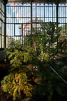 New Caledonia Glasshouse (formerly The Mexican Hothouse), 1830s, Charles Rohault de Fleury, Jardin des Plantes, Museum National d'Histoire Naturelle, Paris, France. Low angle view of the renovated glasshouse being redeveloped with plants. The New Caledonia Glasshouse, or Hothouse, was the first French glass and iron building. The Plant History Glasshouse (formerly Australian Glasshouse), 1830s, Rohault de Fleury is visible through the windows.