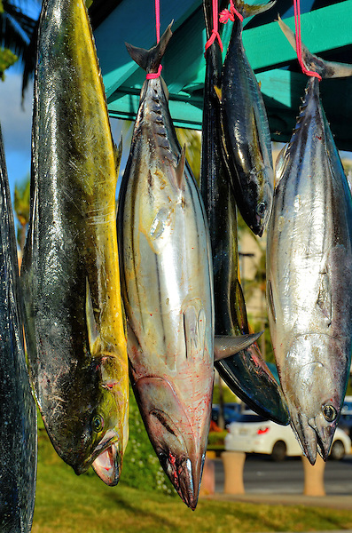 Fresh catch fish hanging in honolulu o ahu hawaii for Plenty of fish oahu