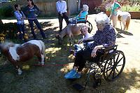 Miniature horses visit with residents at the Park Ridge Skilled Nursing Center in Shoreline, Washington on July 10, 2014. Veterinarian Dana Bridges Westerman and her staff from Professional Equine Therapeutic arranges the therapy visit every year.