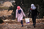 Female Palestinian protesters carry stones container during clashes with Israeli security forces near the Jewish settlement of Beit El, near the West Bank city of Ramallah October 27, 2015. The current round of violence began last month with clashes at Jerusalem's most sensitive holy site, clashes quickly spread to other areas of east Jerusalem, across Israel and into the West Bank and Gaza Strip. Photo by Shadi Hatem