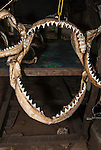 Shark jaws at a Malindi tourist market, Malindi, Kenya