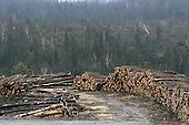 Piles of logs along bush road in forest