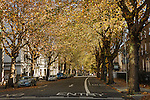 2012: Dublin, Ireland. A canopy of yellow and brown leafed trees covers a roadway in Dublin. Autumn in Ireland