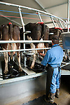 New Zealand, North Island, near Wellington, rotary cow milking shed operation in Wairarapa. Photo copyright Lee Foster. Photo #125956