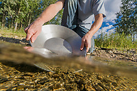 Gold panning in Monument creek, interior, Alaska.