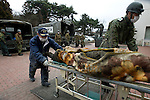 Japan's Self defense force officials unload corpses from a truck at a gymnasium that has been turned into a temporary morgue in  Ishinomaki City, Miyagi Prefecture, Japan on 15 March, 2011. Photographer: Robert Gilhooly