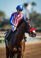 ARCADIA, CA - FEBRUARY 12: Illad #5, ridden by Flavien Prat wins in the San Vicente Stakes at Santa Anita Park on February 12, 2017 in Arcadia, California. (Photo by Zoe Metz/Eclipse Sportswire/Getty Images)
