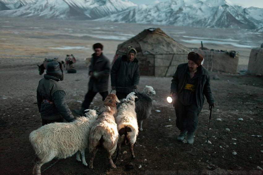 Er Ali Boi counts his goats and sheep after a suspected wolf attack took place..Ech Keli, Er Ali Boi's camp, one of the richest Kyrgyz in the Little Pamir..Trekking with yak caravan through the Little Pamir where the Afghan Kyrgyz community live all year, on the borders of China, Tajikistan and Pakistan.