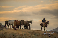 Cowboy watching the horse herd in the early morning.