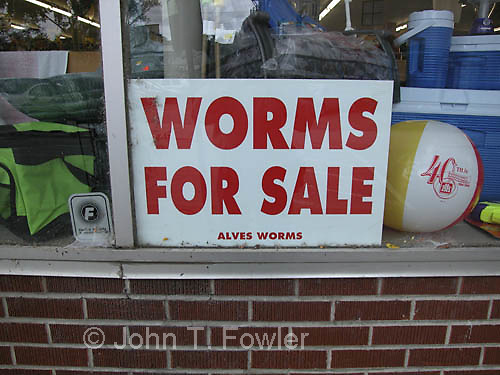 Signs - worms for sale
