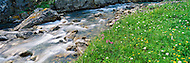 Alpine stream and wildflower meadow in the Coast Mountains