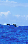Humpback Whales, Hawaii, USA<br />