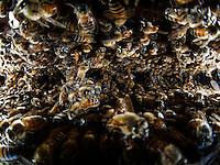 Multitude betwen honeycombs