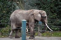 Elephants at Woodland Park Zoo