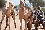 A Fulani man rides a camel cart through the village market of Bourro in northern Burkina Faso.