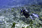 (2004)- Soufriere Scott's Head Marine Reserve,  Commonwealth of Dominica.