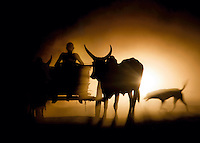 An ox and cart in silhouette on the dusty road to Morondava, Madagascar