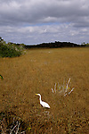 FL: Florida Everglades National Park, bird, egret, Mahogany Hammock.  .Photo Copyright: Lee Foster, lee@fostertravel.com, www.fostertravel.com, (510) 549-2202.Image: flever255