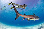 Lesley Rochart swimming with Tiger Sharks (Galeocerdo cuvier)