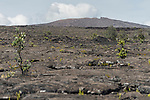 Hawai'i Volcanoes National Park, Big Island of Hawaii, Hawaii; lava flow from Mauna Ulu which erupted in 1969 and flowed for over 4 years, with Mauna Ulu in the background