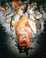 FISH ON ICE<br /> A Source Of Low Fat Protein.
