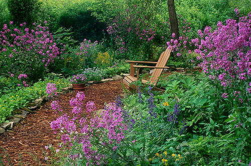 Shade garden path with purple blooming flowers, Dames rocket, and a private place to sit, Missouri USA