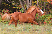 Animals - horses  photos