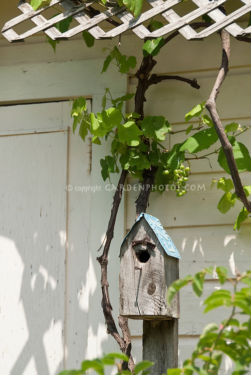 Bird house with license plate roof attached to post in front of house, with grape vine visible