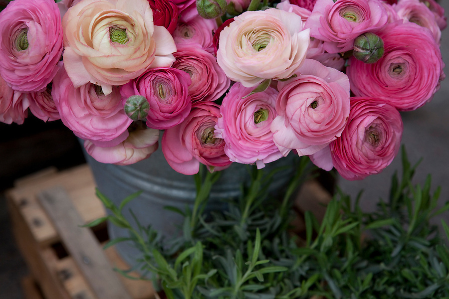 Ranunculus flowers at a market in Berlin, Germany