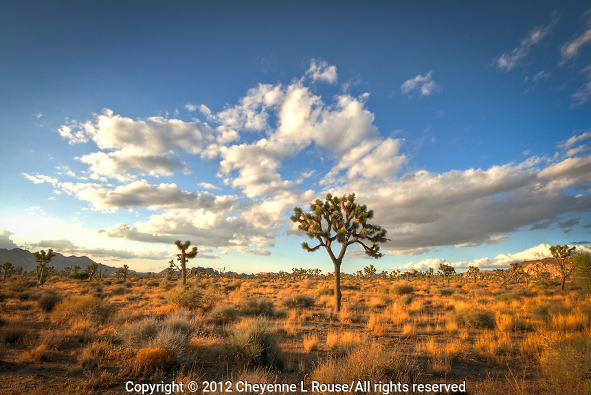 Joshua Trees and Clouds Forever - Joshua Tree National Park, CA