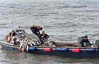 Fishermen haul sockeye salmon on board the wooden, gillnet fishing boat, the F/V Skookumchuck,  in Bristol Bay Alaska.