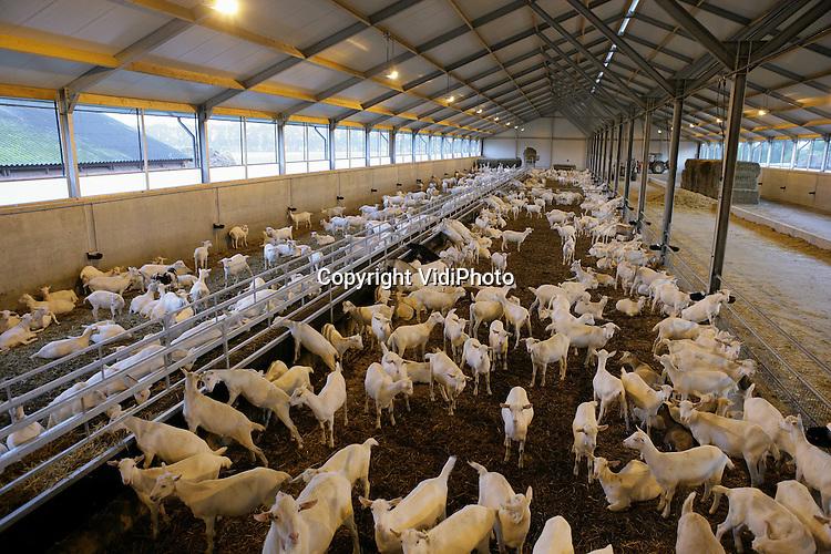 Foto: VidiPhoto..DALFSEN - Veehouder Van Roekel uit Dalfsen bezit zowel een ultra moderne geitenstal voor melkgeiten als een moderne pluimveestal met het volieresysteem.