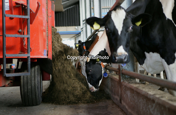 Foto: VidiPhoto..RHENEN - Melkveebedrijf Van de Scheur Rhenen