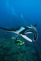 QT1982-D. Manta Ray (Manta birostris) glides above a female scuba diver (model released). Baja, Mexico, Pacific Ocean.<br /> Photo Copyright &copy; Brandon Cole. All rights reserved worldwide.  www.brandoncole.com