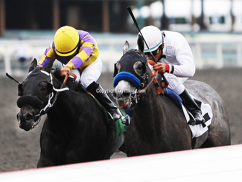 October 16, 2010.Stunning Ally riden by David Flores wins the 7th at Hollywood Park, Inglewood, CA._Cynthia Lum/Eclipse Sportswire.com