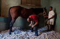 Mauritius. Sébastien Poupard, course farrier at the Champs de Mars racecourse. Port Louis.