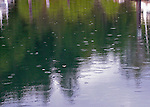 rain falling in a calm marina in the San Juan Islands freflecting the green trees and a certain lightening to the sky when preparing for a holiday