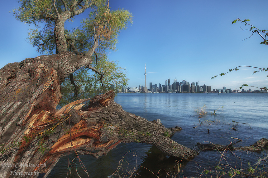 Toronto skyline view with broken tree on the Toronto Islands after a tough winter.