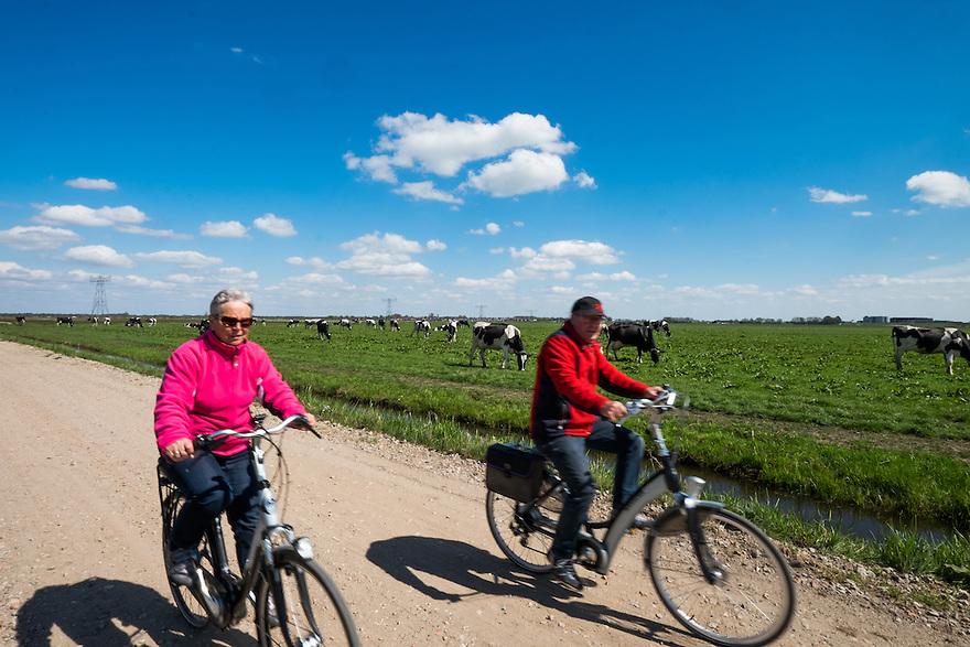 Nederland, Zwartsluis, 2 mei 2015<br /> Natuurboerderij Weidevol. Biologisch melkveebedrijf. <br /> Fietsers fietsen over een boerenweggetje langs een weiland vol met koeien.<br /> Foto: Michiel Wijnbergh