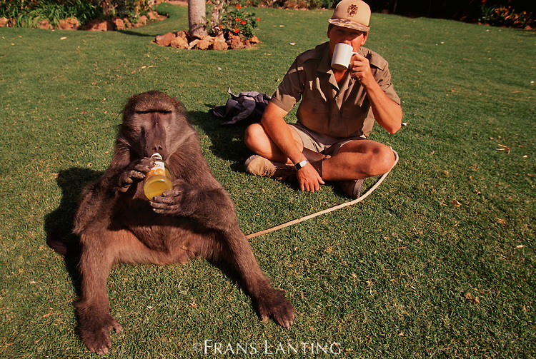 Baboons As Pets