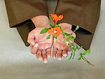 A Asian man's hand holding blossoms