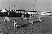 Bicylces tethered to trees in a schoolyard in Milton Keynes.
