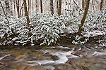 Snow blankets the forest along Rocky Fork, Unicoi County, Tennessee