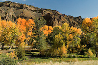 Volcanic basalt backdrop for these glorious aspens along the North Fork of the Shoshone River, East of Yellowstone's East Gate, Park County, Wyoming.