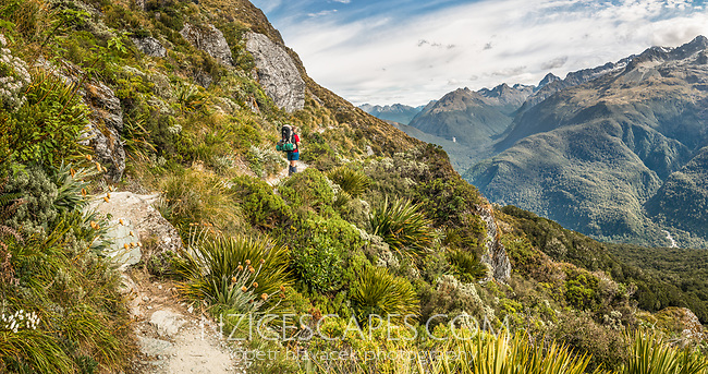 Fields of alpine vegetation on western slopes of Ailsa Mountains on Routeburn Track with tramper. Darran Mountains on right, Fiordland National Park, UNESCO World Heritage Area, Southland, South Island, New Zealand, NZ