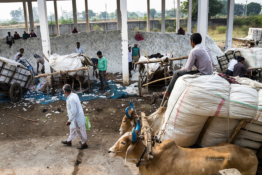 Farmers and their bullock-carts come to unload cotton at a ginning factory contracted by Pratibha, a Fairtrade-certified establishment, in Maheshwar, Khargone, Madhya Pradesh, India on 13 November 2014. Photo by Suzanne Lee for Fairtrade