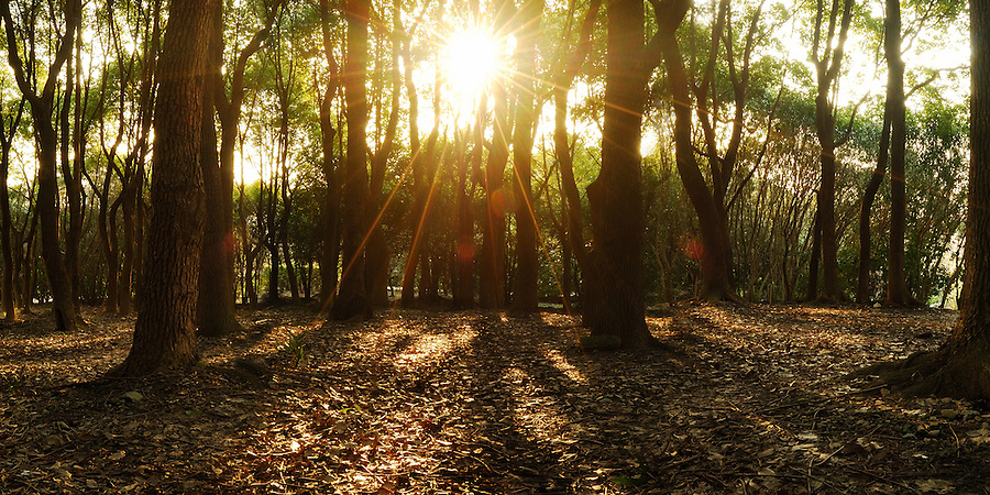 Beautiful scenery of nature sun light breaking through the forest floor. Landscape fine art photography taken by Paul Chong.