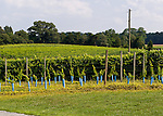 New vines have been planted near the manor house at General's Ridge Vineyard and Winery.