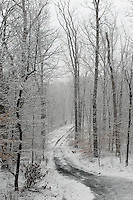 A winter woods road located in Albemarle County, VA. Photo/Andrew Shurtleff